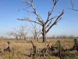 Defensoría del pueblo de Boyacá en alerta por fenómeno de El Niño